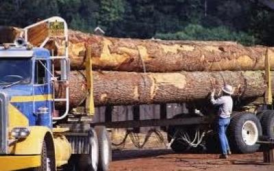 Logging and Timber